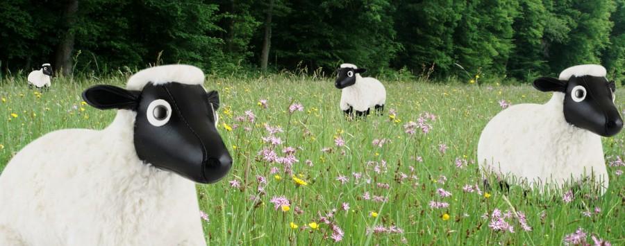 le mouton2